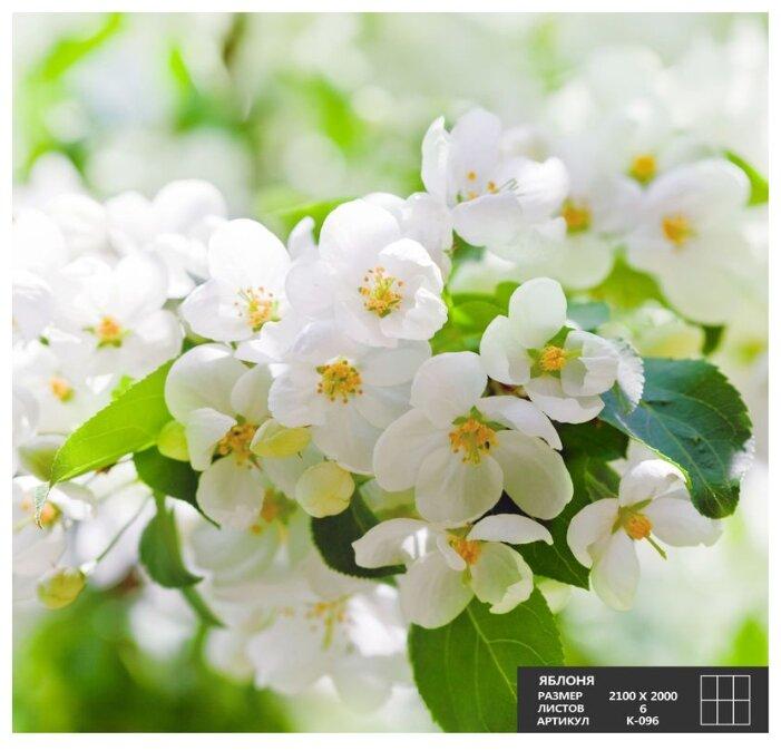 Фотообои бумажные Симфония Яблоня К-096 2х2.1м