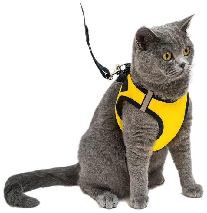 тому поводок для котов картинки тест драйв скуторы