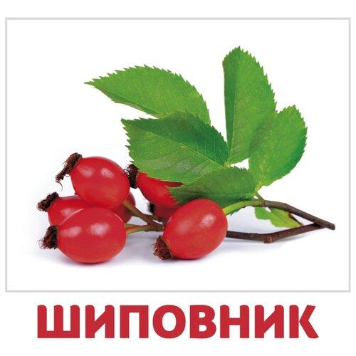 Набор карточек Агабум Ягоды 20 шт. ягоды 12 красочных карточек