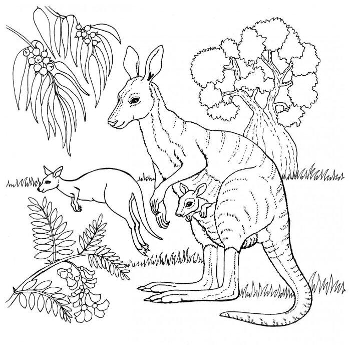 Распечатать картинки диких животных для раскрашивания