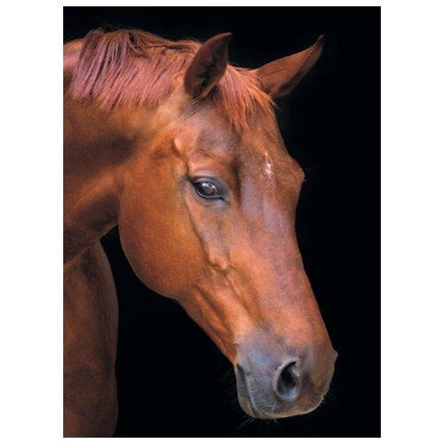 Алмазная вышивка Цветной Лошадь в тишине, 50x40