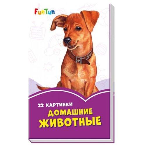 Купить Домашние животные, FunTun, Книги для малышей