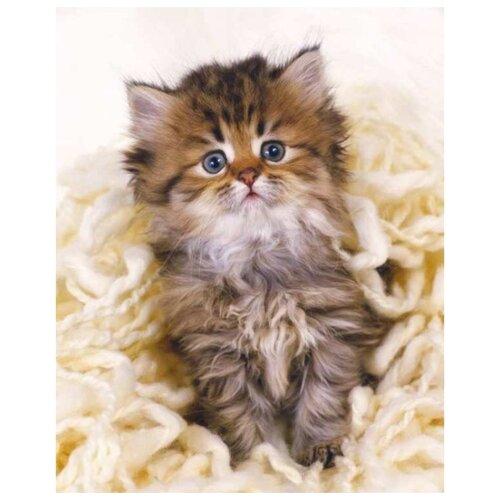 Фото - Рыжий кот Картина по номерам Милый пушистый котёнок 40х50 см (Х-3526) рыжий кот картина по номерам винни пух союзмультфильм 18х24 см х 5440
