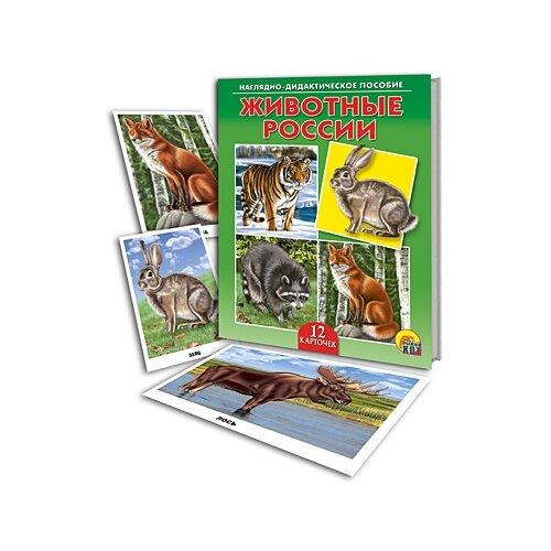 Купить Наглядно-дидактическое пособие Животные России , Рыжий кот, Учебные пособия