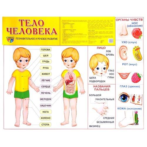Купить Плакат Творческий Центр СФЕРА Тело человека, Обучающие плакаты