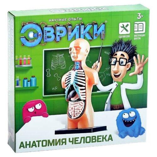 Купить Набор ЭВРИКИ Анатомия человека, Наборы для исследований