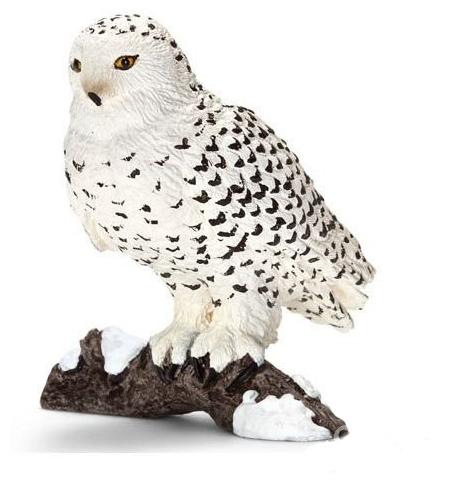 Полярная сова и описание для детей 75