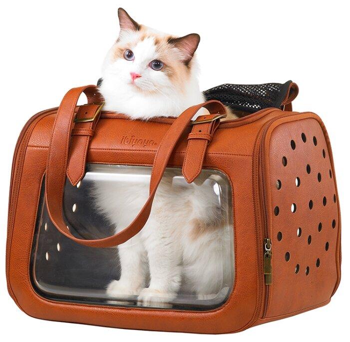 пять переноска для котят картинки может