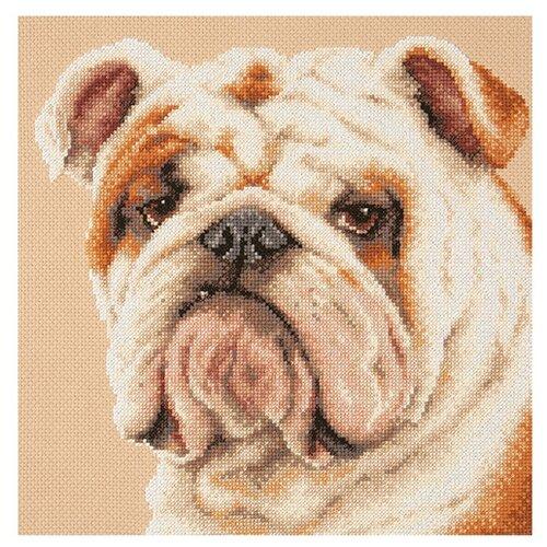 Купить Чудесная Игла Набор для вышивания Английский бульдог 25 x 25 cм (59-21), Наборы для вышивания