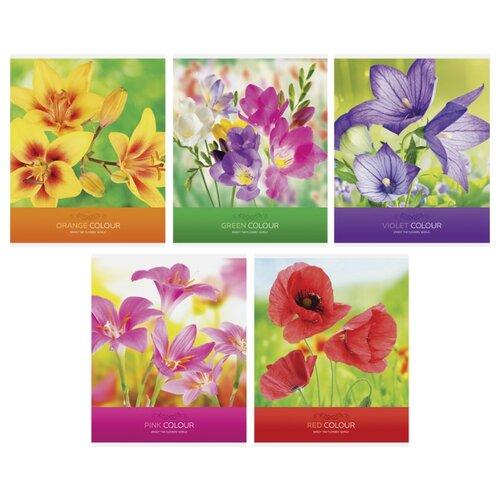 Купить ArtSpace Упаковка тетрадей Цветы. Яркие цветы Т48к_24348, 10 шт./5 дизайнов, клетка, 48 л., Тетради