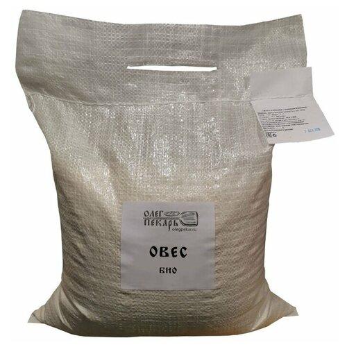 БИО зерно овес для проращивания Олег пекарь. Шугуровское зерно, 5 кг.