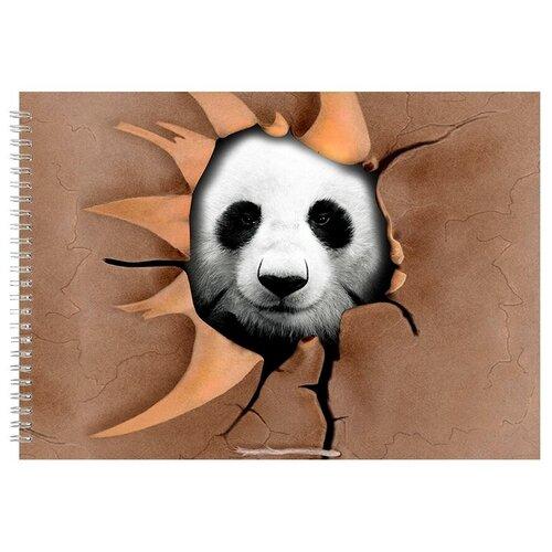 Альбом для рисования, скетчбук Панда