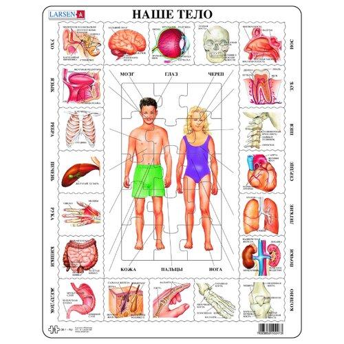 Купить Рамка-вкладыш Larsen Наше тело (OB1), 35 дет., Пазлы