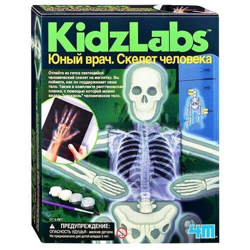 Купить Набор 4M Юный врач. Скелет человека 00-03375, Наборы для исследований