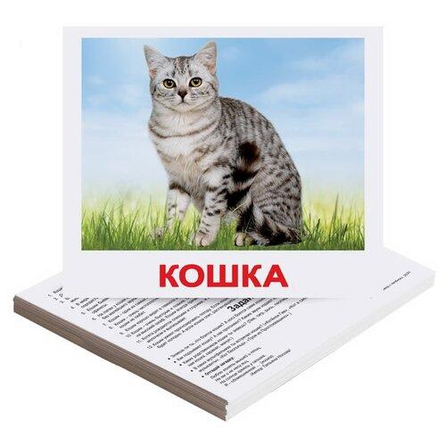 Фото - Набор карточек Вундеркинд с пелёнок Домашние животные 19.5x16.5 см 20 шт. набор карточек умка умные игры домашние животные 15 7x10 7 см 32 шт