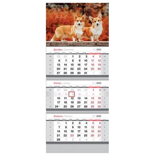 Купить Календарь квартальный настенный на 2022 год Милые корги , OfficeSpace, Календари