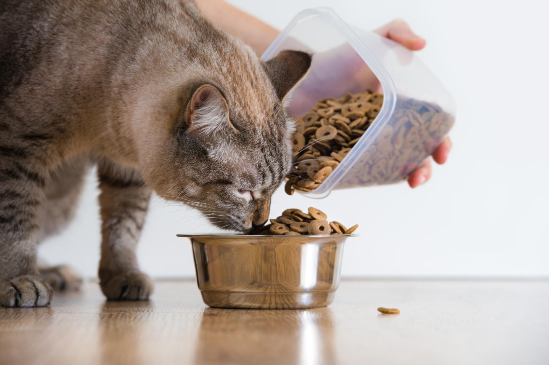 Если кота кормить крупой