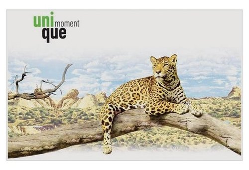 Альбом для рисования ArtSpace Животные Уникальные моменты 29.7 х 21 см (A4), 100 г/м², 24 л.