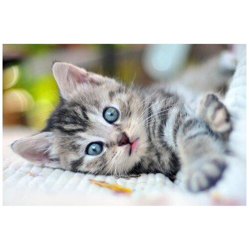 Рыжий кот Картина по номерам