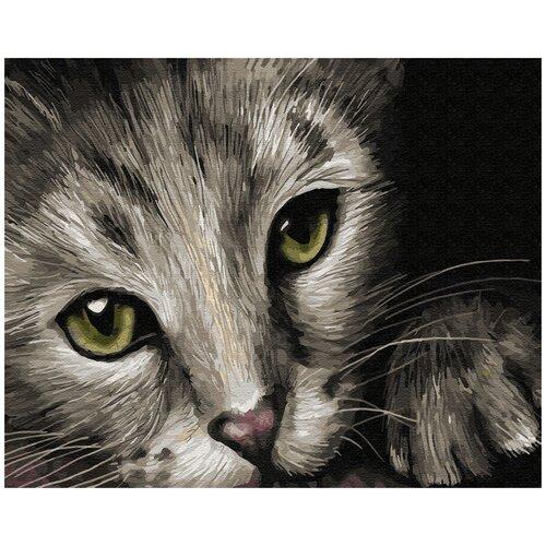 Купить Картина по номерам ВанГогВомне Кошачьи глаза 40х50 см, ВанГогВоМне, Картины по номерам и контурам