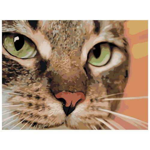 Хищный кот Раскраска по номерам на холсте Живопись по номерам