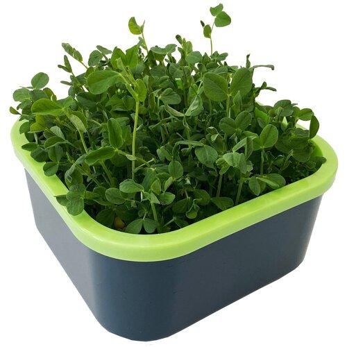 Здоровья КЛАД Проращиватель Моя микрозелень серый