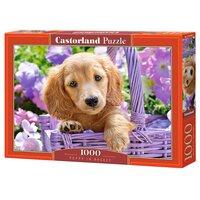 Пазл Castorland Puppy in Basket (C-103799) , элементов: 1000 шт.
