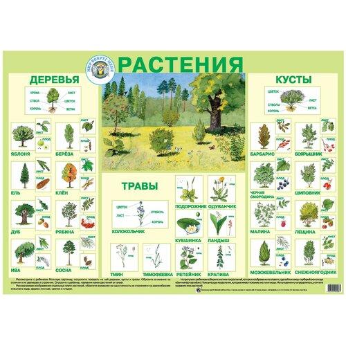 Плакат Маленький гений Растения 9006