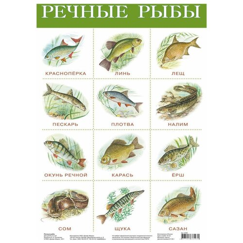 Плакат Дрофа-Медиа Речные рыбы 2165