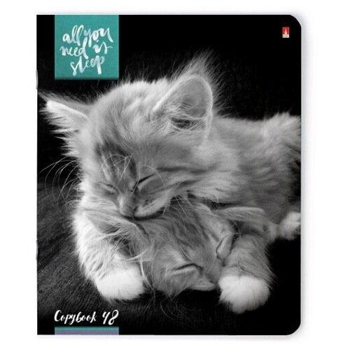 Тетради 48 листов серия котята МУР-МУР Набор 5 шт. Цена за 5 штук. тетради 48 листов в клетку серия премиум металлик набор 5 шт цена за 5 штук