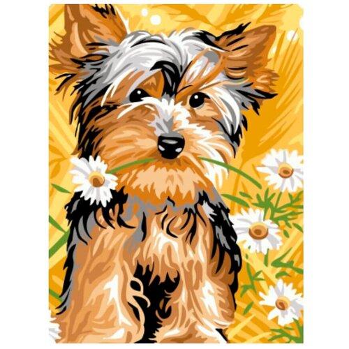 Купить Цветной Картина по номерам Йоркширский терьер с ромашками 30х40 см (EX5256), Картины по номерам и контурам