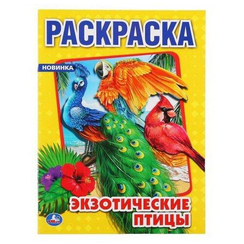 Купить Раскраска УМка Экзотические птицы формат А4, Умка, Раскраски
