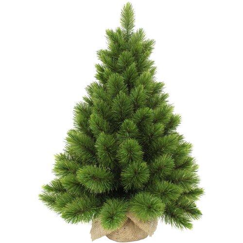 Фото - Triumph Tree Ель Триумф Норд в мешочке, 60 см ель триумф норд 425 см зеленая 73078 triumph tree
