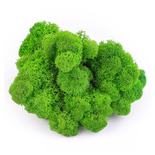 Мох ягель премиум в пакете 100 гр, зеленый, OKTAUR