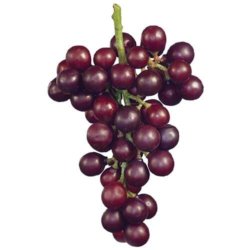 Фото - Искусственная плодовая ветвь Виноград крупный круглый черный 22 см, цвет: винный саженцы калина плодовая