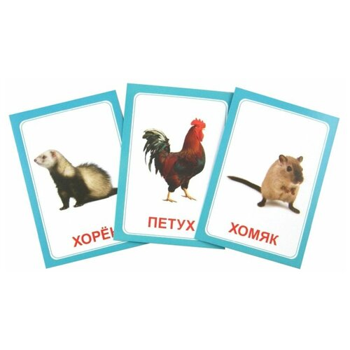 Фото - Набор карточек Вундеркинд с пелёнок Логопедка Щ+Х 10x7 см 30 шт. раннее развитие вундеркинд с пелёнок набор обучающих карточек чтение по доману 2 30 шт