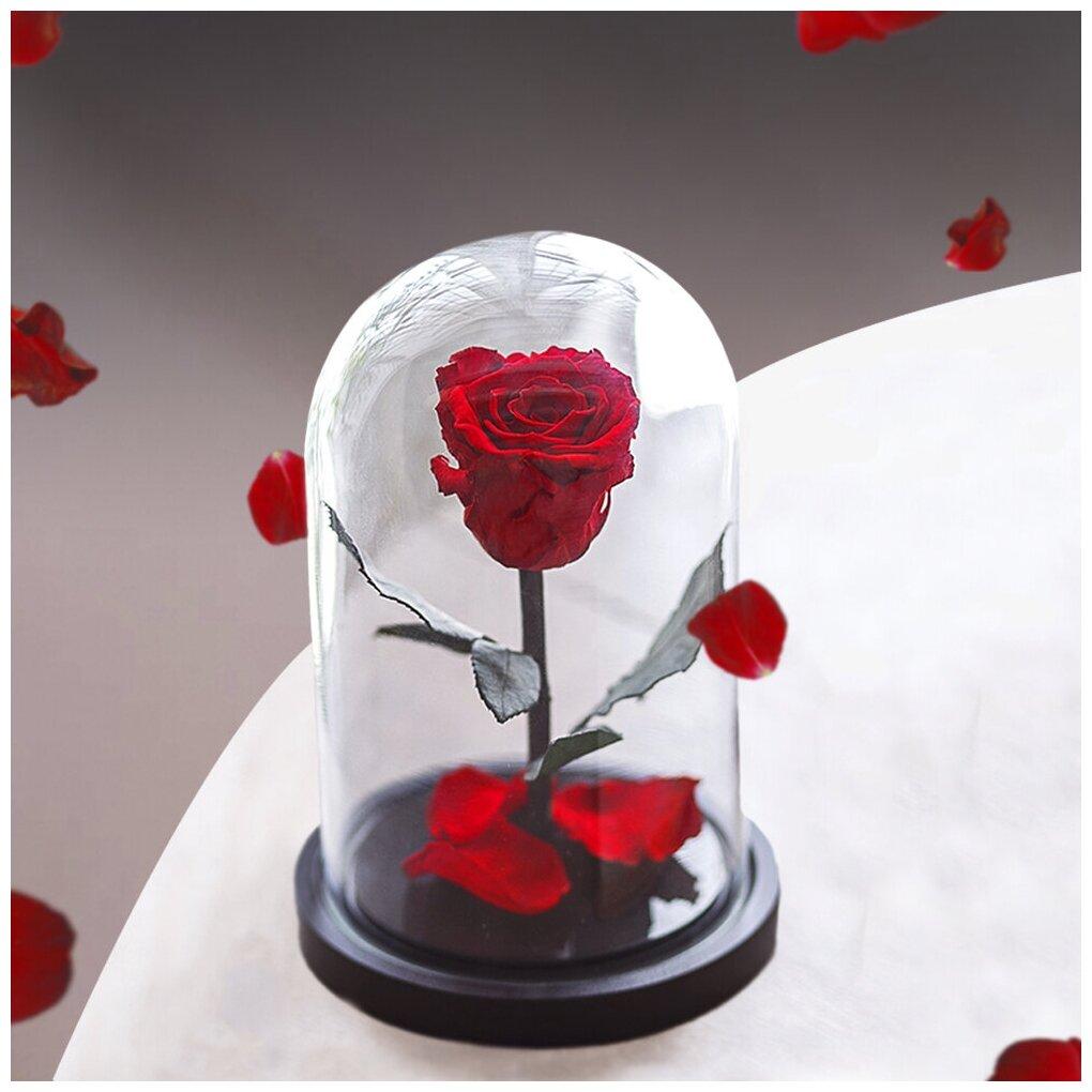 Долговечная стабилизированная роза в стеклянной колбе Mini - Notta & Belle — купить по выгодной цене на Яндекс.Маркете