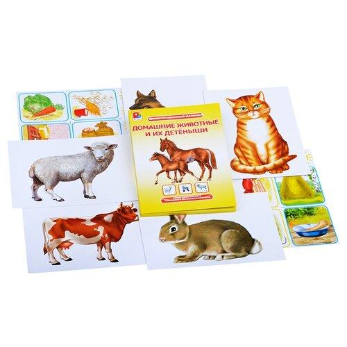 Набор карточек Радуга Домашние животные и их детеныши 36 шт. мельник в мамина н андреева ю домашние животные и их детеныши