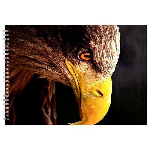 Альбом для рисования, скетчбук Голова орла