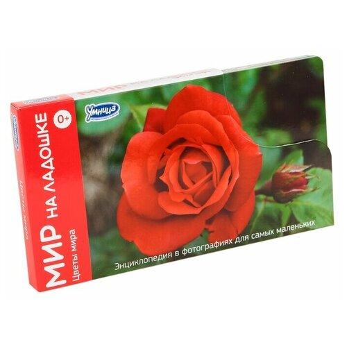 Фото - Набор карточек Умница Мир на ладошке. Цветы мира 18.2x10.2 см 24 шт. набор карточек агабум цветы 20 шт