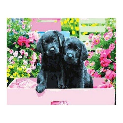 Купить Картина по номерам на холсте Paintboy Два щенка , 40х50 см, GX-36961, Картины по номерам и контурам