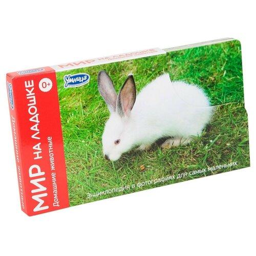 Фото - Набор карточек Умница Мир на ладошке. Домашние животные 18x10 см 24 шт. набор карточек умка умные игры домашние животные 15 7x10 7 см 32 шт