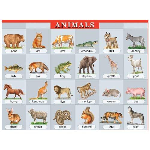 Животные. Наглядное пособие по английскому языку