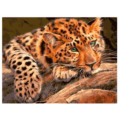 "Цветной Картина по номерам ""Леопард"" 30х40 см (EX5807)"