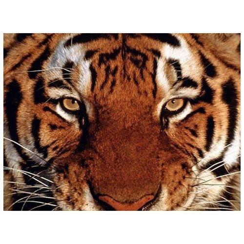 Купить Алмазная вышивка Яркие Грани Взгляд тигра , размер 50х38см (200х150 кристаллов), 51 цвет
