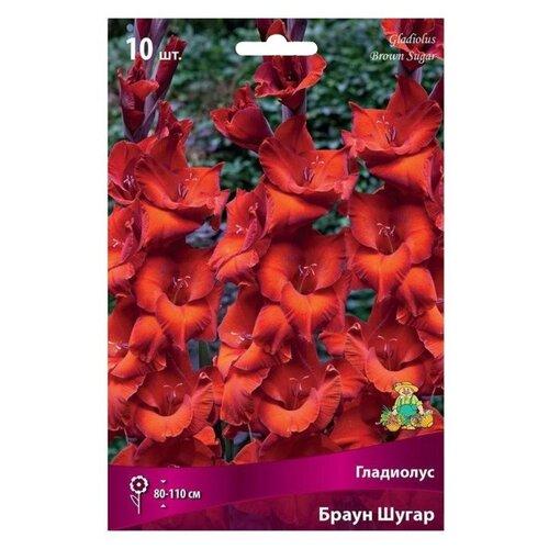 Гладиолус ПОИСК Браун Шугар, 10 шт., цвет: кирпично-красный printio шугар рэй робинсон