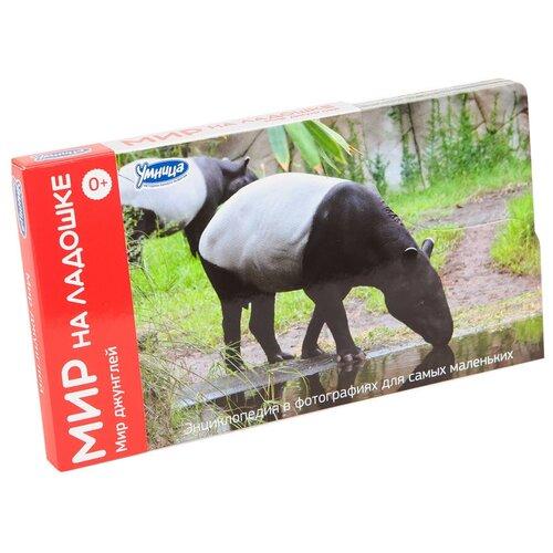 Фото - Набор карточек Умница Мир на ладошке. Мир джунглей 18x10 см 24 шт. набор карточек умница мир на ладошке в доме 18x10 3 см 25 шт