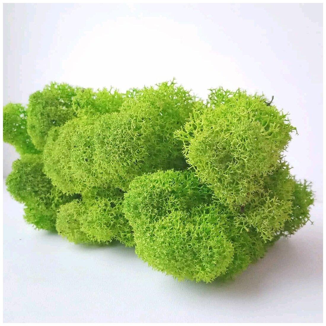 Стабилизированный мох RozaRose 100 гр. - салатовый — купить по выгодной цене на Яндекс.Маркете