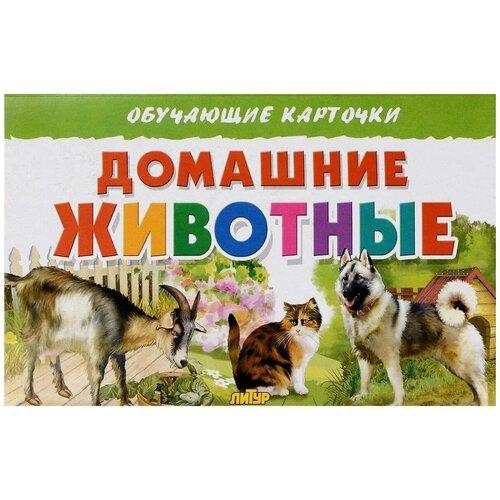 Фото - Набор карточек Литур Домашние животные 20x13 см 16 шт. набор карточек умка умные игры домашние животные 15 7x10 7 см 32 шт