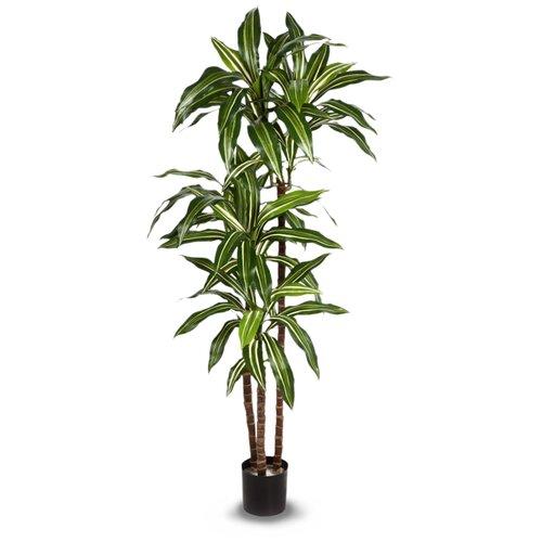 Искусственное дерево Драцена Джанет Крейг бело-зелёная 150 см, цвет: темно-зеленый декор настенный 20 1х40 5 azolla 2 бело зелёная